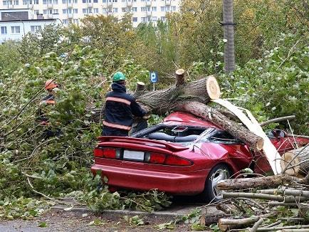 tree damage