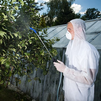 tree insect control