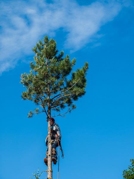 Tree Arborist Newmarket