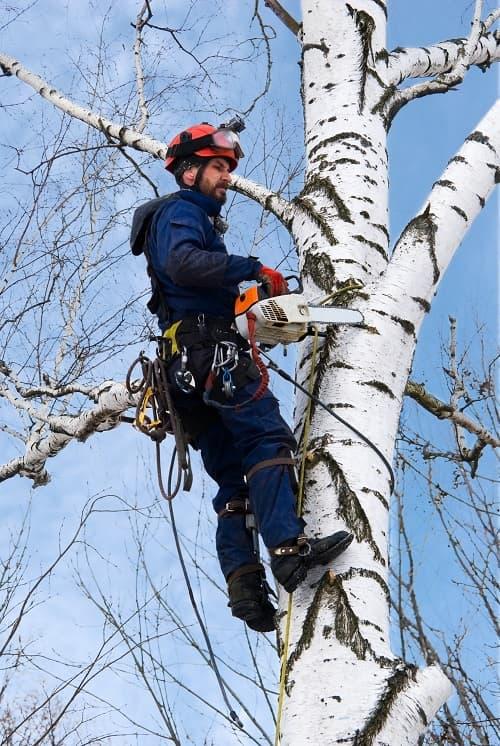 Tree Arborist Alliston