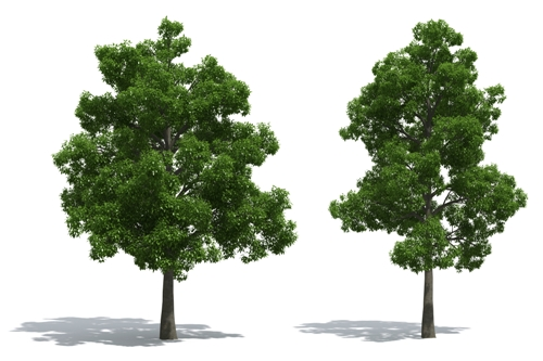 Enhance Curb Appeal With Shade Trees