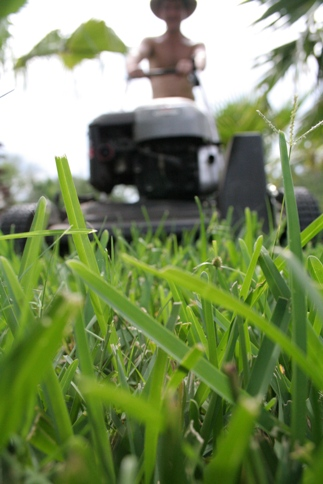 Six Essential Summer Lawn Care Tips