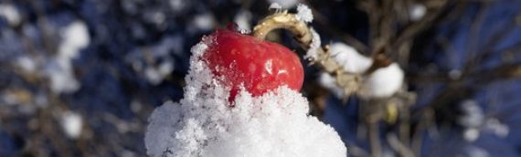 Tips for Winterizing Fruit Trees
